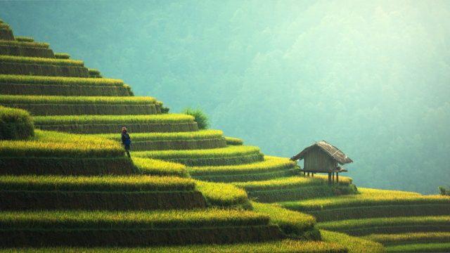 農用地の土壌汚染の基準